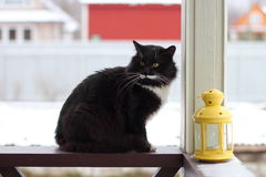 Serious cat  at terrace. Black and white serious cat with yellow eyes near candlesticks Stock Images