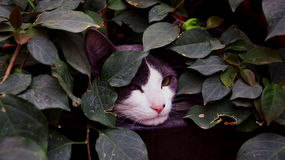 Serious cat in the wilderness Royalty Free Stock Photography