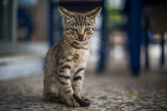 Serious cat in Zakynthos, Greece Stock Photo