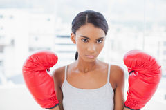 Serious competitive model with boxing gloves posing Royalty Free Stock Photo