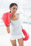 Serious competitive model with boxing gloves threatening camera royalty free stock photography