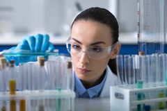 Serious cute biologist working with the vials focusing on it. stock photos