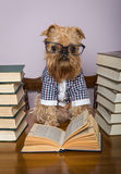 Serious dog  reads books Stock Image