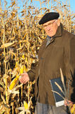 Serious farmer in field Royalty Free Stock Photography