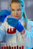 Serious female chemist working in laboratory Stock Photo