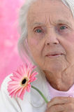 Serious Great Grandmother. With a pink Gerbera flower, photographed on a pink background. Woman in her eighties Royalty Free Stock Photo