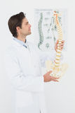 Serious male doctor looking at skeleton model Royalty Free Stock Photos