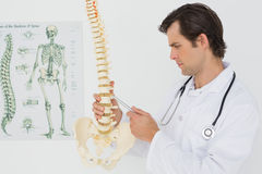 Serious male doctor looking at skeleton model Royalty Free Stock Photography