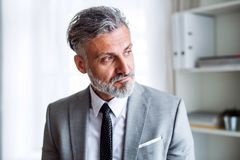 A serious mature businessman standing in an office. royalty free stock image