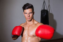 Serious muscular boxer in health club Stock Images