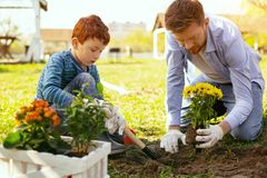Serious nice father and son working in the garden. On the farm. Serious nice father and son planting flowers while working in the garden royalty free stock photography