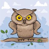 Serious Owl Royalty Free Stock Photo