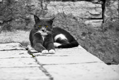 Serious Pretty Cat on Old Town Street Royalty Free Stock Photography