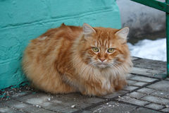 Serious red cat sitting on the threshold Stock Photos