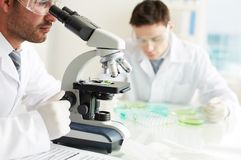 Serious researcher Stock Image