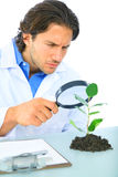 Serious Scientist Examine Green Life. Young doctor checking on green life using loupe royalty free stock image