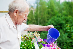 Concentrated Senior Watering Flowers Stock Image