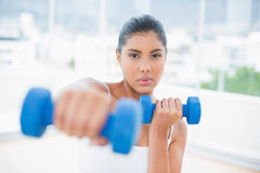 Serious toned brunette boxing dumbbells towards camera Royalty Free Stock Photo