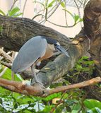 Serious Tropical bird Stock Photo
