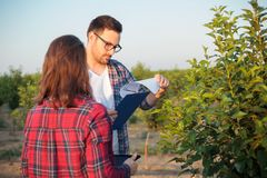 Serious young male and female agronomists or farmers working in a fruit orchard royalty free stock image