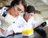 Serious young scientists working. In a laboratory stock photo