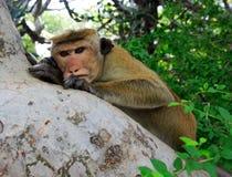 Seriuos monkey seat on tree Stock Photos
