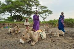 Seronera Tanzania, Februari 12, 2016: Maasai arbetsdags Royaltyfri Foto