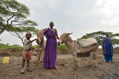 Seronera Tanzania, Februari 12, 2016: Maasai arbetsdags Fotografering för Bildbyråer