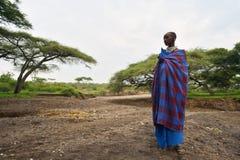 Seronera Tanzania, Februari 12, 2016: Maasai arbetsdags Royaltyfria Bilder
