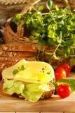 serowa kanapka Fotografia Royalty Free
