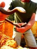 Serpeggi il wrangler, lotte dell'uomo con un serpente della scala Fotografie Stock