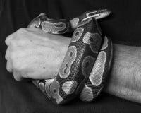 Serpent à disposition Photo libre de droits