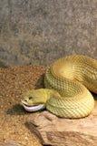Serpent à sonnettes Photos libres de droits