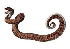 serpent à sonnettes du rendu 3D sur le blanc Images stock