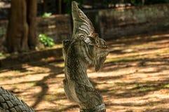serpent Fotografia Stock