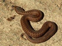 Serpent 2 photos libres de droits