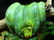 Serpent Photographie stock