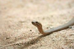 Serpent Image libre de droits