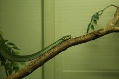 Serpent photos libres de droits