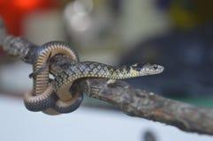 Serpent avec l'arbre dans le Brazip Images libres de droits
