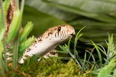 Serpent caché photos libres de droits