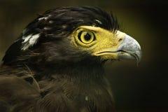 Serpent crêté Eagle Photos libres de droits