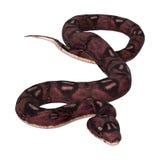 serpent d'anaconda du rendu 3D sur le blanc Photo stock