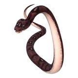 serpent d'anaconda du rendu 3D sur le blanc Images libres de droits