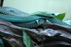 Serpent d'arbre. Photographie stock