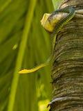 Serpent d'arbre de paradis Image libre de droits