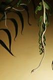 Serpent d'arbre rampant en végétation forestière tropicale image libre de droits