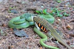 Serpent d'or d'arbre Image libre de droits
