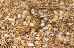 Serpent dans l'eau image libre de droits