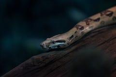 Serpent dans la mini-serre Photographie stock libre de droits